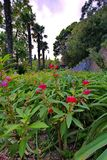 Lovely red flowers among the green leaves on the flower bed. Growing in the shade of trees and exotic palm trees. For your design stock image