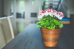 Lovely red geranium flowers in pot on table at living room and window background. Home design Royalty Free Stock Images