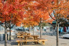 Lovely red maple leaves with some benches. At Toronto, Canada royalty free stock images