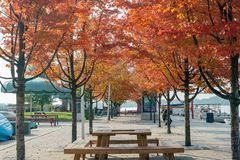 Lovely red maple leaves with some benches. At Toronto, Canada royalty free stock photography