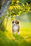 Lovely red puppy is basking in the sun at the tree stock photography