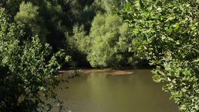 Lovely river view. Beautiful summer greenery and the river on a sunny windy day stock video