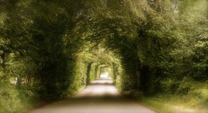 Romantic road in Wicklow valley Royalty Free Stock Image