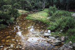 A hiking trail at Jubilee Creek, a picnic spot in the Knysna Forest near Knysna, South Africa Royalty Free Stock Images