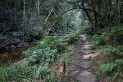 A hiking trail at Jubilee Creek, a picnic spot in the Knysna Forest near Knysna, South Africa Royalty Free Stock Photography