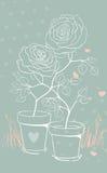 Lovely roses Stock Image