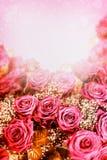 Lovely Roses background. Festive roses card. Royalty Free Stock Image