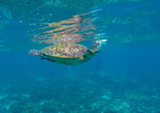 Lovely sea turtle closeup. Stock Photo