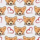 Lovely seamless pattern with puppy welsh corgi and heart. Vector cute background Stock Photography