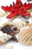 Lovely seashells against Royalty Free Stock Photos