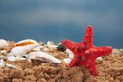 Lovely seashells against Royalty Free Stock Image