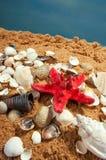 Lovely seashells against Royalty Free Stock Images