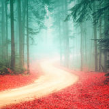 Lovely seasonal color foggy forest road royalty free stock image