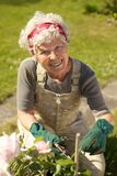 Lovely senior woman taking care for plants Stock Images