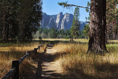 Lovely shady path in Yosemite Park Stock Images