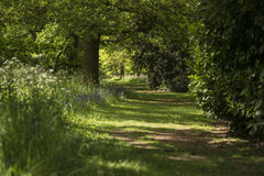 Lovely shallow depth of field fresh landscape of English forest. Beautiful shallow depth of field fresh landscape of English forest and countryside in Spring Stock Images