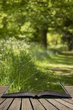 Lovely Shallow Depth Of Field Fresh Landscape Of English Forest Stock Photography
