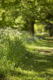 Lovely Shallow Depth Of Field Fresh Landscape Of English Forest Royalty Free Stock Photos