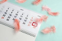 Lovely simple composition of calendar and coral feathers on blue surface stock photo