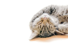 Lovely sleeping cat Royalty Free Stock Photos