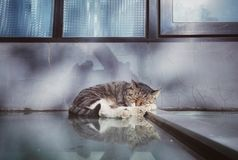 Lovely sleeping civet cat 4 Royalty Free Stock Photo