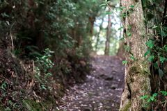 A pathway in Northern Tasmania at a nature reserve. Lovely soft focus on a pathway leading into a forest reserve walk in Northern Tasmania royalty free stock photos