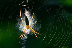 Lovely spider Royalty Free Stock Photos