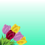 Lovely spring background with tulip flowers. Tulips bunch. Springtime.Spring background with colorful tulips bouquet. Vector illustration Stock Photo
