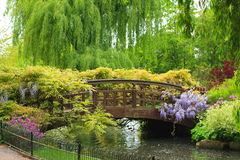 Lovely spring garden. Queen Mary's Garden, London Royalty Free Stock Image