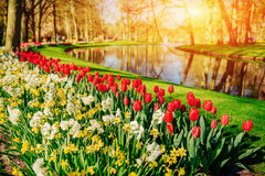 Lovely spring landscape park. Blooming flowers. Holland Stock Photos