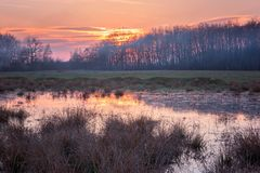Lovely spring marsh at sunset, colorful nature landscape. With colored sky and reflection in the water royalty free stock photo