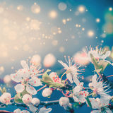 Lovely spring or summer blooming with bokeh and sun flare, floral border stock photography