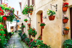 Lovely street decoration with flowers - Spello village in Umbria Stock Image
