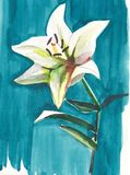 Lovely subtle yellow lily on a blue background isolated watercolor hand sketch. Lovely subtle beige lily on a blue background isolated watercolor hand sketch royalty free illustration