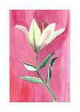 Lovely subtle yellow lily on a pink background isolated watercolor hand sketch. Lovely subtle beautiful beige lily on a pink background isolated watercolor hand stock illustration