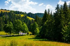 Lovely summer countryside in mountains. Grassy meadow near the spruce forest Royalty Free Stock Photos