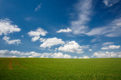 Lovely summer field Stock Photography