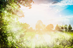 Lovely summer nature background with trees foliage , sky, field and sun rays, outdoor Stock Photos