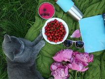 A lovely summer picnic on the green herbage by a pet. A picnic on a blue cloth laid, A cherry cup, a gray British cat Stock Images