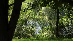 Lovely summer river view. Beautiful view on the waving trees and the river on a windy summer day stock footage