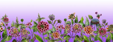 Lovely summer wide banner. Beautiful lantana flowers with green leaves on light purple background. Horizontal template. Seamless panoramic floral pattern Royalty Free Stock Photography