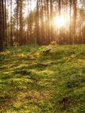 Lovely Sunset Behind The Forrest In Russia. Sunrise In A Forest, Sunbeams Through The Trees.  stock images