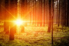 Lovely Sunset Behind The Forrest In Russia. Sunrise In A Forest, Sunbeams Through The Trees.  royalty free stock photo