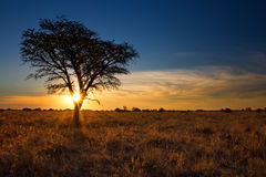 Lovely sunset in Kalahari with dead tree Stock Photo