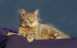 Lovely tabby cat Stock Photo