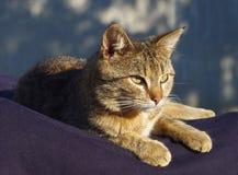 Lovely tabby cat Stock Images