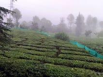 Lovely tea garden Injoy stock images