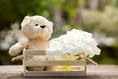 Lovely teddy bear in wooden box on wood, Concept of love hope a Royalty Free Stock Image