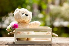 Lovely teddy bear in wooden box on wood, Concept of love hope a Stock Photo