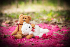 Lovely teddy brown and white Royalty Free Stock Image